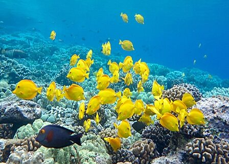 Kealakekua Bay protected marine life